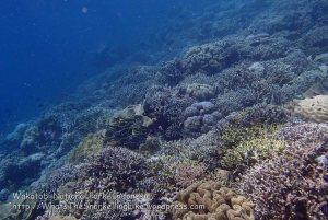 102_Wanci-02b_Bestbit-Coral_P8090084_P1018603.jpg