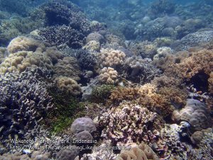 103_Wanci-02b_Bestbit-Coral_P8090086_P1018605.jpg