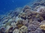 129_Wanci-02c_Good-Coral_P8090114_P1018633.jpg