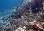 184_Wanci-06_Blue-Coral_P8210048_P1010062.jpg
