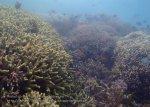 450_Hoga-01c_Corals_P8170157_P1018680.jpg