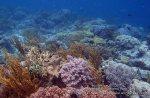 465_Hoga-02a_Soft-Coral_P8150058_P1018590.jpg