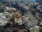 516_Hoga-03_Cardinalfish_P8150124_P1018529.jpg