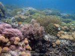 558_Hoga-05_Reeftop_P8150197_P1018610.jpg
