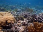 561_Hoga-05_Reeftop_P8150200_P1018613.jpg