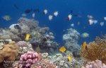 576_Hoga-05_Pyramid-Longnose-Butterflyfish_P8150220_P1018633.jpg