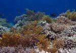 590_Hoga-06_Reeftop_P8170019_P1018541.jpg