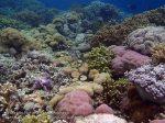 592_Hoga-06_Reeftop_P8170013_P1018535.jpg