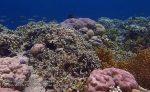 594_Hoga-06_Reeftop_P8170017_P1018539.jpg