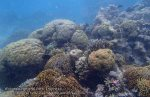 661_Hoga-07_Reef_P8170082_P1018605.jpg