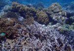 757_Tomia-02ab_Reef_P8130015_P1018537.jpg