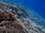 758_Tomia-02ab_Reef_P8130016_P1018538.jpg