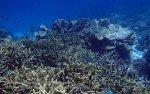 763_Tomia-02ab_Reef_P8130036_P1018558.jpg