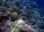 770_Tomia-02bc_Reef_P8130064_P1018586.jpg