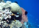 771_Tomia-02bc_Reef_P8130067_P1018589.jpg