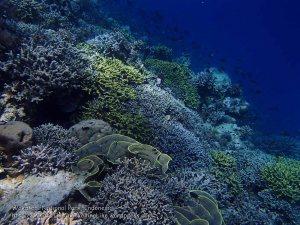 777_Tomia-02c_Reef_P8130088_P1018608.jpg