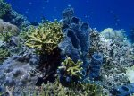 778_Tomia-02c_Reef_P8130090_P1018610.jpg