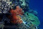 779_Tomia-02c_Reef_P8130081_P1018601.jpg