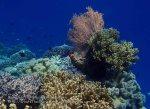 781_Tomia-02c_Reef_P8130095_P1018615.jpg