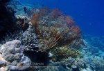 787_Tomia-02c_Reef_P8130105_P1018625.jpg