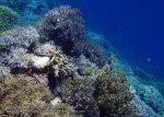 789_Tomia-02c_Reef_P8130114_P1018634.jpg