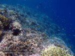 803_Tomia-03_Reef_P8120024_P1018549.jpg