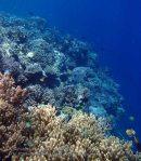 805_Tomia-03_Reef_P8120041_P1018566.jpg