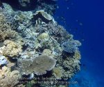 807_Tomia-03_Reef_P8120048_P1018573.jpg