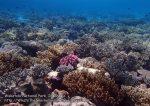 808_Tomia-03_Reef_P8120050_P1018575.jpg