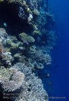 809_Tomia-03_Reef_P8120067_P1018592.jpg
