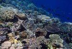 810_Tomia-03_Reef_P8120068_P1018593.jpg