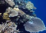 812_Tomia-03_Reef_P8120072_P1018597.jpg