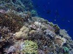813_Tomia-03_Reef_P8120081_P1018606.jpg
