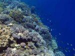 814_Tomia-03_Reef_P8120082_P1018607.jpg