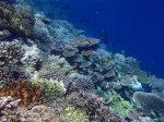 820_Tomia-04_Reef_P8120089_P1018614.jpg