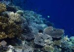 821_Tomia-04_Reef_P8120090_P1018615.jpg