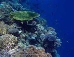 822_Tomia-04_Reef_P8120093_P1018618.jpg
