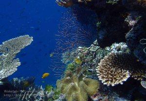 833_Tomia-05_Reef_P8120162_P1018689.jpg