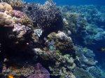 834_Tomia-05_Reef_P8120106_P1018631.jpg