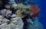 835_Tomia-05_Reef_P8120107_P1018632.jpg