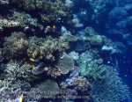 836_Tomia-05_Reef_P8120109_P1018634.jpg