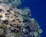 837_Tomia-05_Reef_P8120114_P1018639.jpg