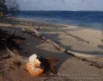 863_Tomia-Island-Drive_Pantai-Huntente_P8120235_P1018775.jpg