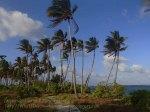 864_Tomia-Island-Drive_Pantai-Huntente_P8120237_P1018777.jpg