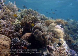 884_Tomia-07_Reef_P8110077_P1018592.jpg