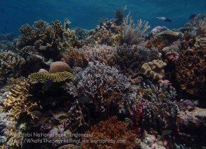 885_Tomia-07_Reef_P8110100_P1018613.jpg