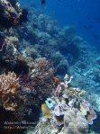 888_Tomia-07_Reef_P8110034_P1018555.jpg