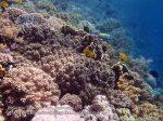 889_Tomia-07_Reef_P8110084_P1018598.jpg