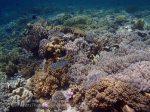890_Tomia-07_Reef_P8110089_P1018602.jpg