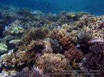 891_Tomia-07_Reef_P8110065_P1018582_.jpg